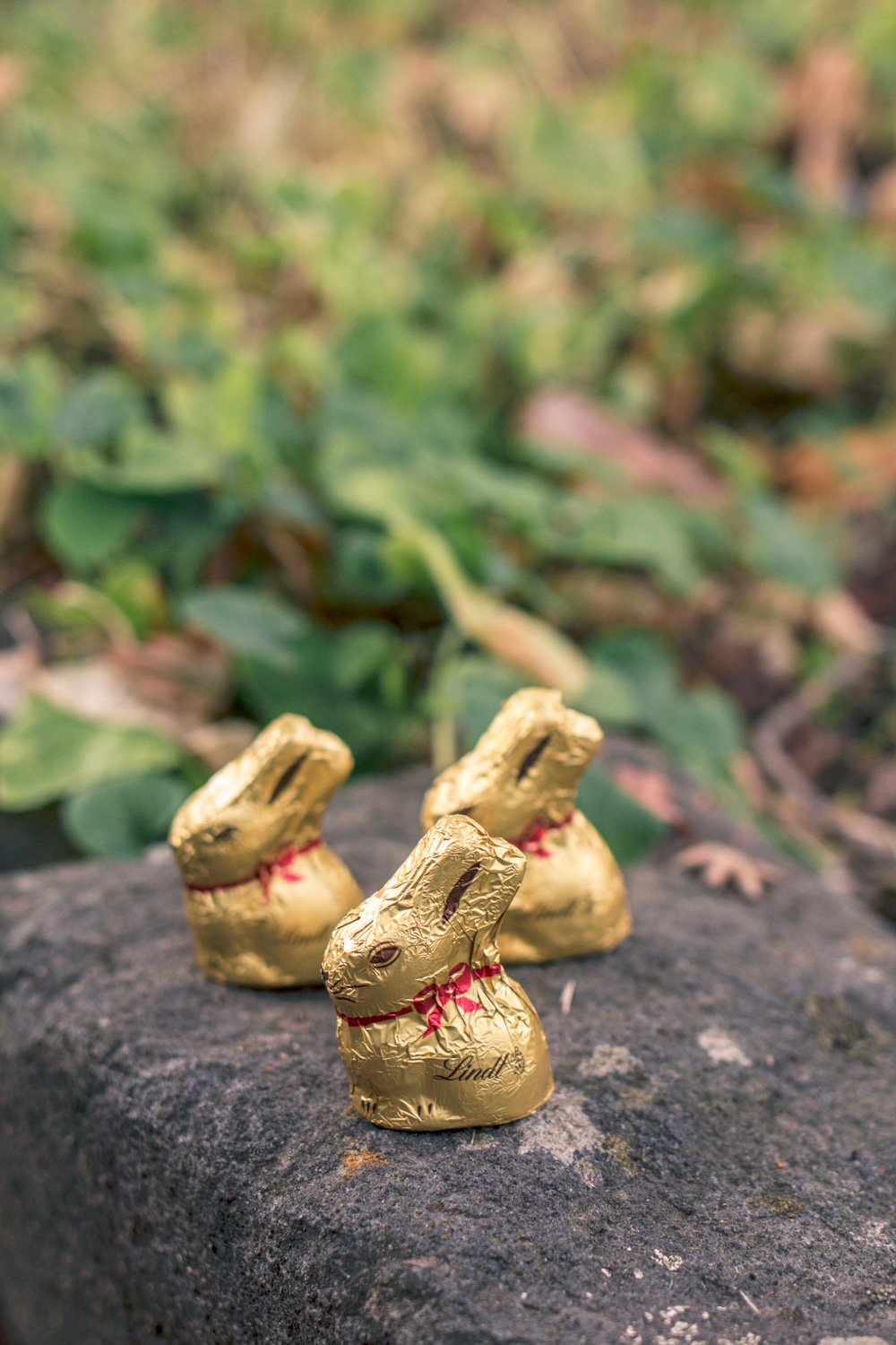 Chocolate easter bunnies and bilbies at Autumn themed easter egg hunt