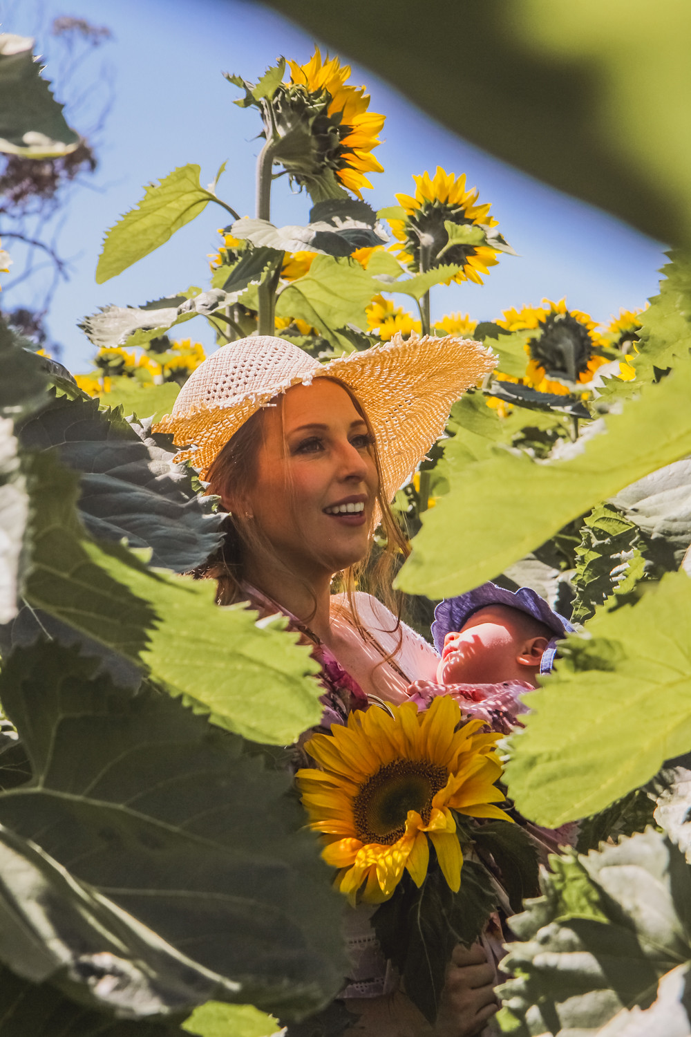 Goldfields Girl and sleeping baby hidden amongst sunflowers