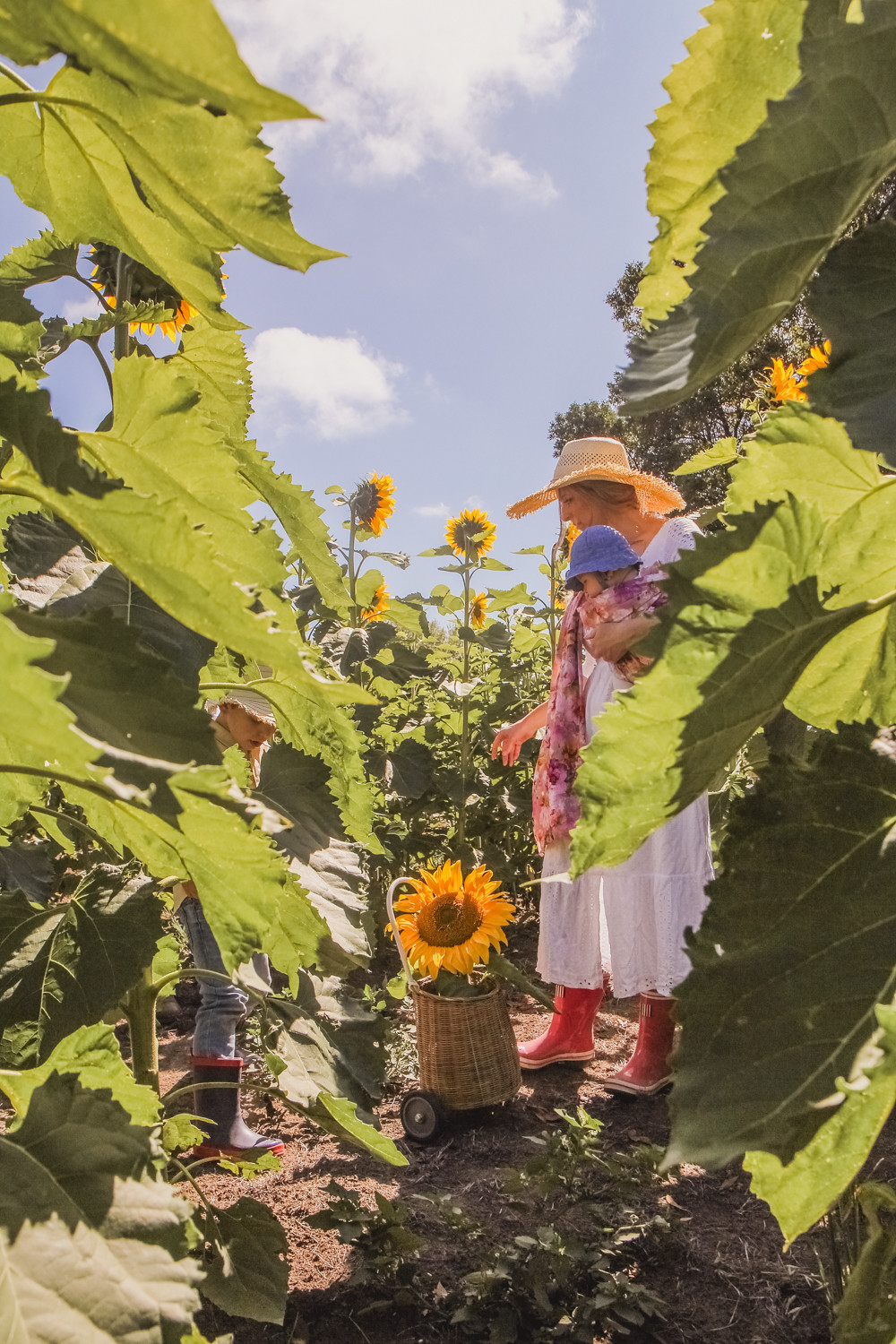 Goldfields Girl at sunflower farm in Ballarat in Victoria. Wearing white eyelet dress, straw hat and pink ring sling baby carrier pulling Olli Ella buggy filled with sunflowers