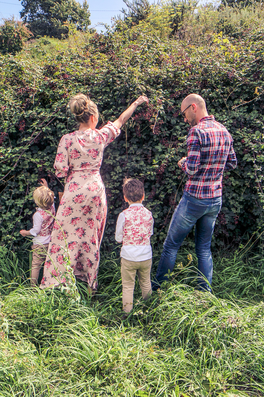 Family picking blackberries