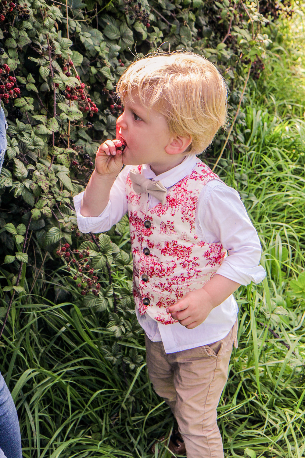 Little boy eating a blackberry from the bush